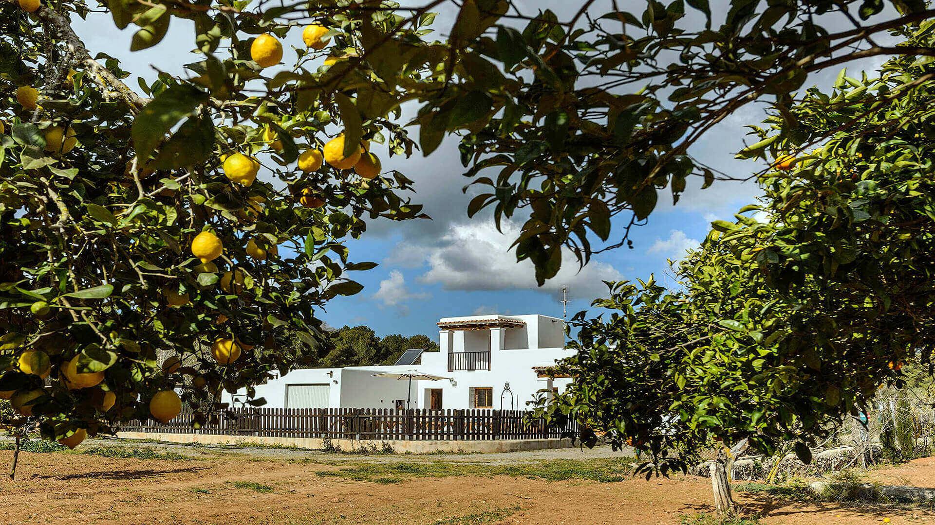 Villa Los Naranjos Ibiza 15 Cala Llonga