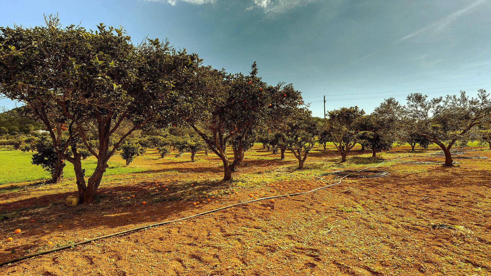 Villa Los Naranjos Ibiza 16 Cala Llonga