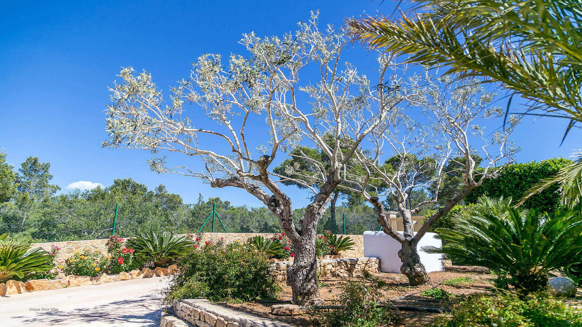 Villa Vista Monte Ibiza 18 Near San Miguel